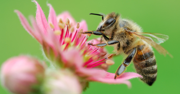 climate-change-hinders-bee-pollination